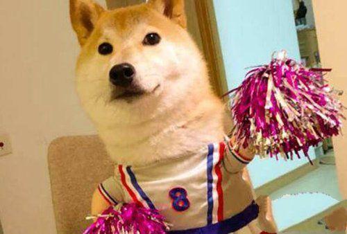 全抖音最火的6大宠物博主,第一名粉丝量超过2000w